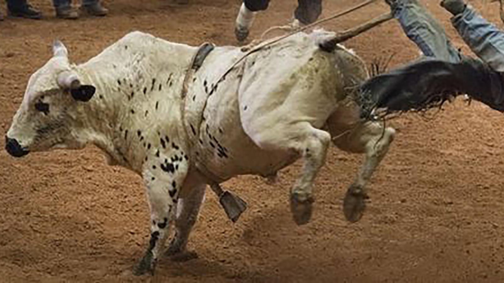 Tuff Hedeman Bull Riding