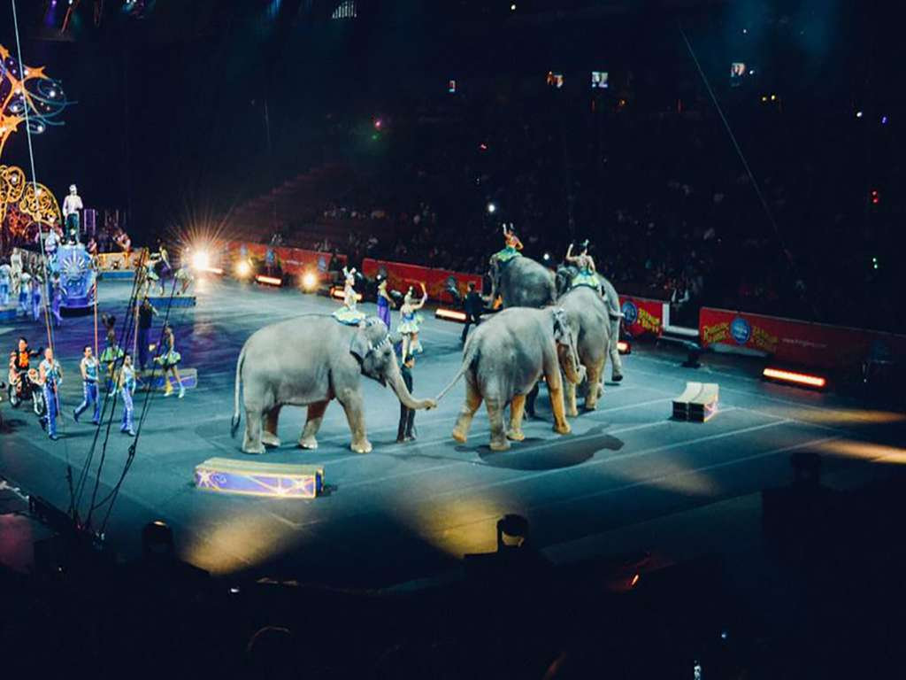 Shrine Circus (Rescheduled from 3/22/2020, 10/18/2020)