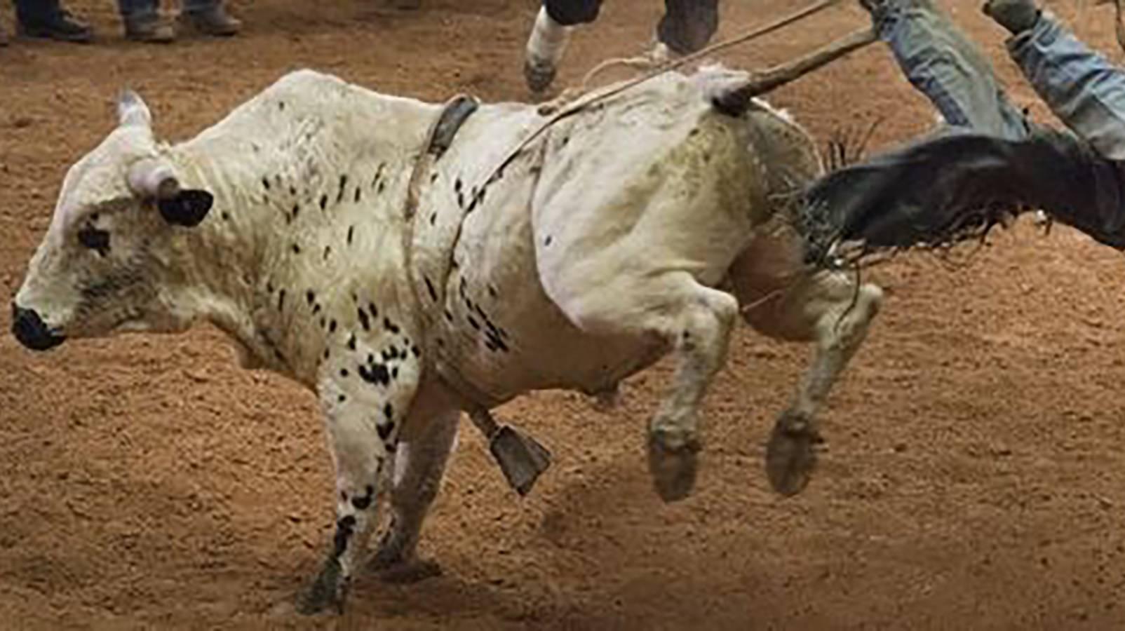 PBR - Professional Bull Riders World Finals (Saturday)