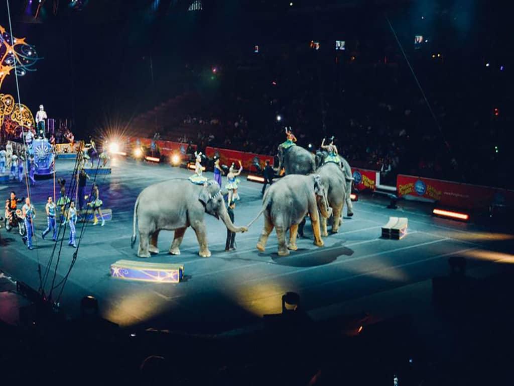 Golden Dragon Acrobat Circus