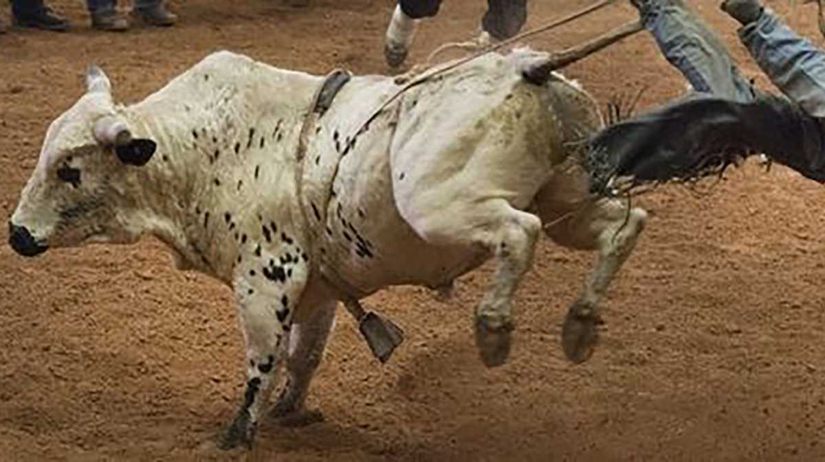 World's Toughest Rodeo (Rescheduled from 5/8)