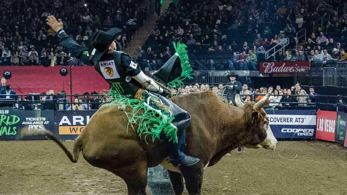 Calgary Stampede Afternoon Rodeo