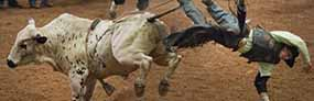 Pro Bull Riding World Finals Tickets